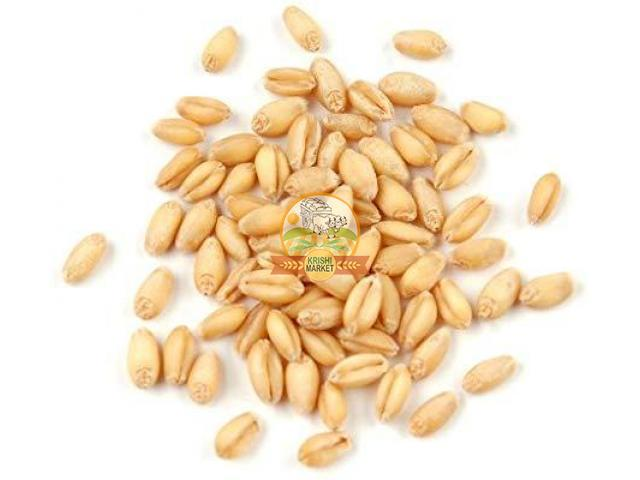 Wheat from mp ( milling quality) - 1/1