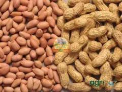 Selling of groundnut