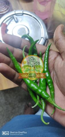 Hybrid Chilli Nagma 404 for sale - 2/3