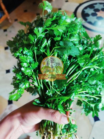 Fresh Coriander Leaves - 2/3