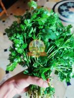 Fresh Coriander Leaves - Image 2/3