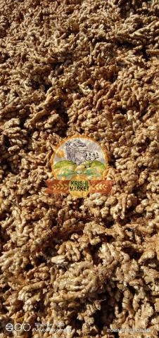 Best quality ginger seeds - 1/2