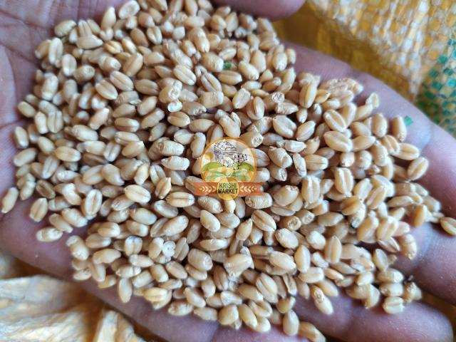Wheat (No Chemicals) - 1/1