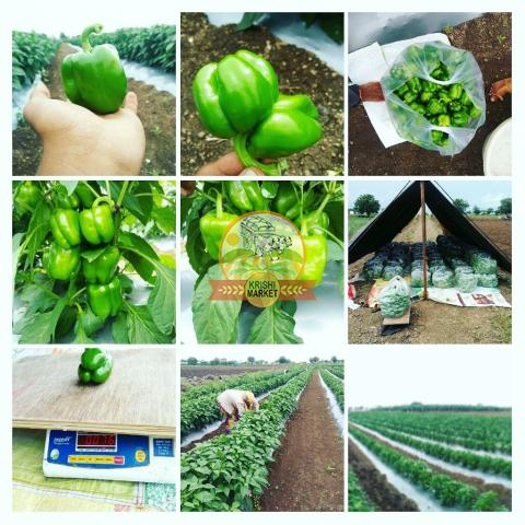 I want buyer for green capsicum in Maharashtra, India - 1/2