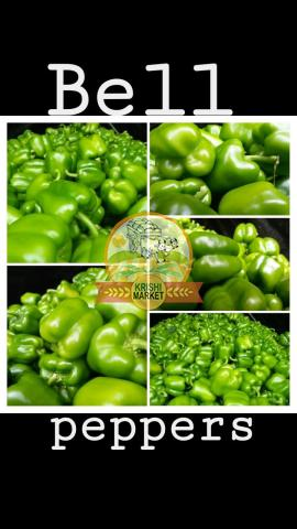 I want buyer for green capsicum in Maharashtra, India - 2/2