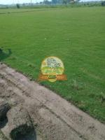 Decoration Green Natural Lawn Grass For Garden - Image 2/2