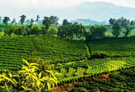 farms-costa-rica-real-estate