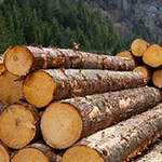 Wood and Timber